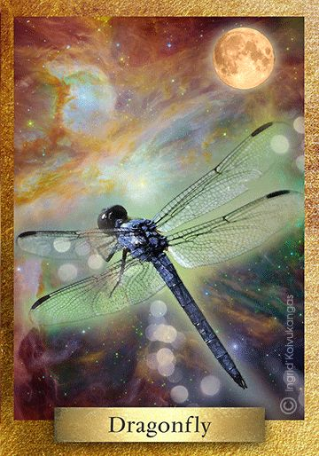 Dragonfly* symbolizes transformation and wisdom, change and light. Dragonflies are connected to water and air, beginning life in water and magically transitioning to life on air. They are fairy like in their appearance and powerful connectors to the nature spirit world. * One of the 48 cards in the EcoHeartOracle.com - this is a brief description and not the complete oracle meaning.