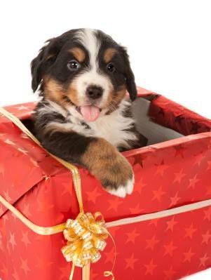 Pets Hobbies & Personal Activities Hunde