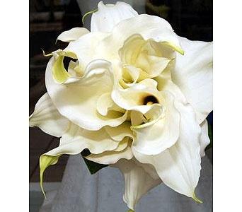 Bridal bouquet - Composite bouquet of all full size calla lilies.
