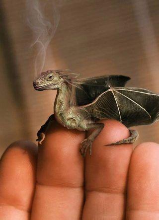 Хотите, чтобы у вас был свой добрый Дракон?