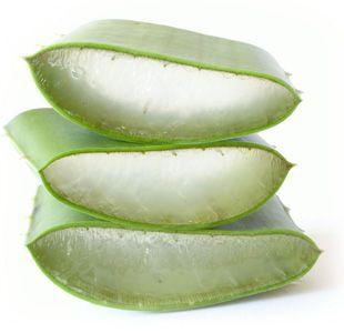 Aloe Vera coupe
