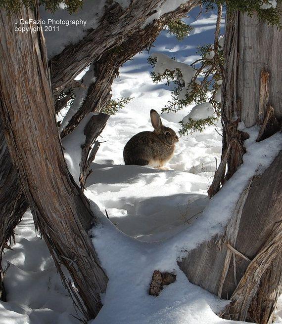 Rabbit In The Snow Winter Scene 8x10 Fine by JDEFAZIOPHOTOGRAPHY, $25.00