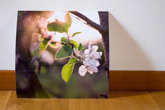 Fiori di melo al tramonto Fotografia 30x30cm di BrightSpotOfColour, €23.00