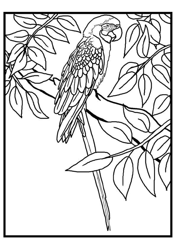 Les 25 meilleures id es de la cat gorie dessin perroquet sur pinterest dessin de perroquet - Perroquet a colorier ...