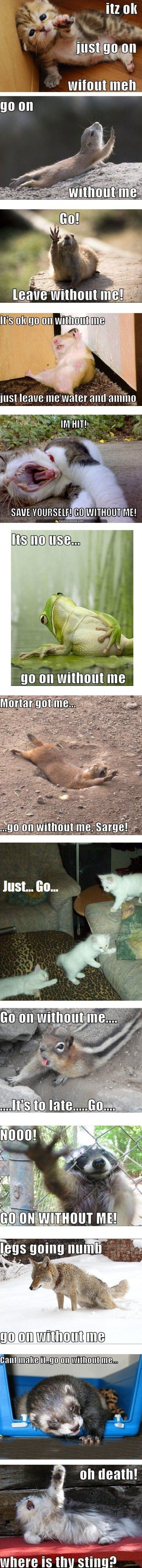 Funny images of the day, 80 pics. Dramatic Animals (Compilation)