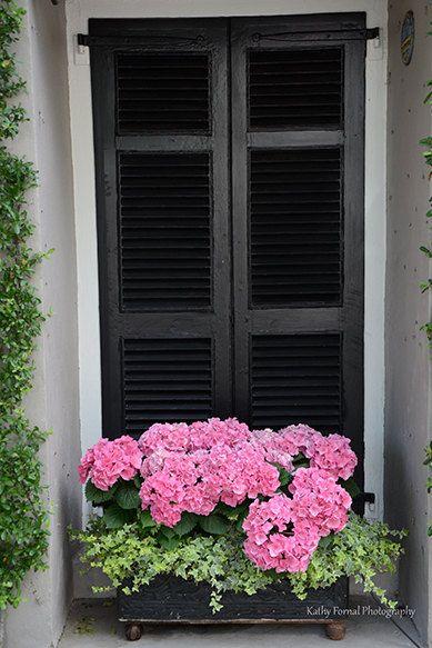 Pink Hydrangeas Flower Photography, Charleston Window Box Flowers, Shabby Chic Charleston Pink Hydrangeas, Charleston Window Box Wall Decor
