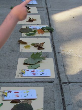 Going on a leaf hunt with printable: Color