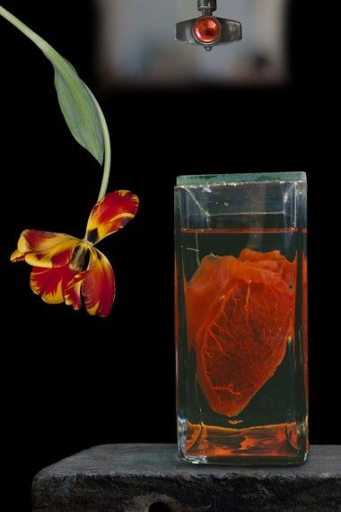 """Olivia Parker Heart and Flower ~ 2010 ~ 22"""" x 33"""""""