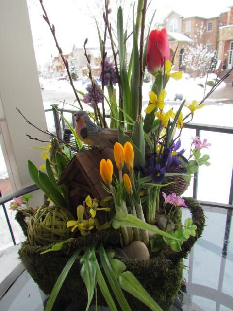Spring Bulb Garden!   Spring blossoms on a bed of moss , framed with twigs and pussy willows ... whispering the promise of Spring soon! Created by www.grandentrancedesign.com #spring #garden