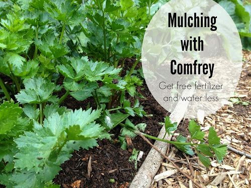 Nature, Nurture, Grow: Guide to Mulching with Comfrey