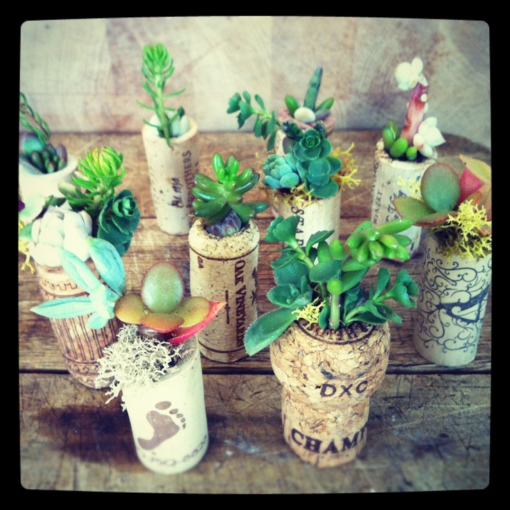 Succulents in corks.