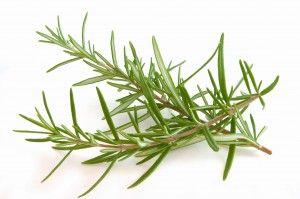 Rosemary-Biberiye