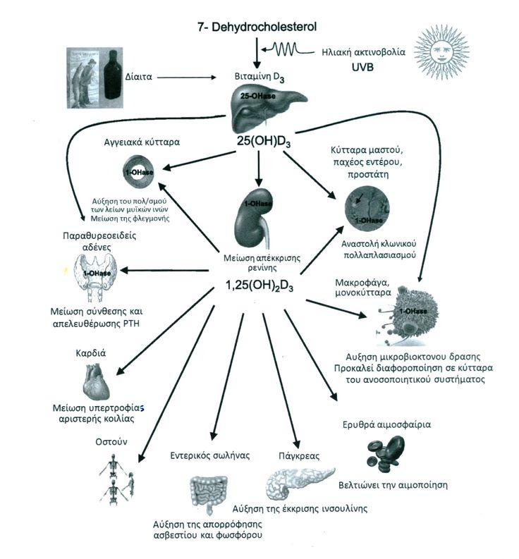 Βιταμίνη D3: το καλύτερα κρυμμένο μυστικό της φαρμακοβιομηχανίας;