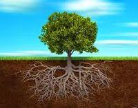 Memento Mori!: El árbol del Pastor: modestia por arriba, récord mundial por abajo