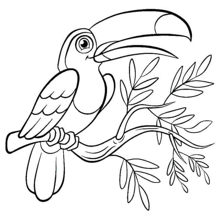 Tropical Bird Coloring Pages Bird Coloring Pages Cartoon Coloring Pages Animal Coloring Pages