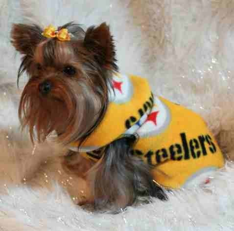 NFL Pittsburgh Steelers Football Dog Snuggly XS or SM by valygal, $10.00