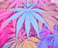 42O<3: Cannabis, Pastel, Pots Leaf, Medical Marijuana, Phones Backgrounds, Color, High Time, Leaves, Mary Jane