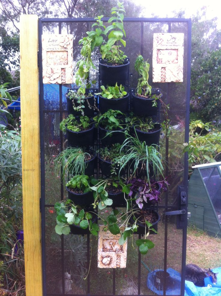 My herb garden on old throw out screen door