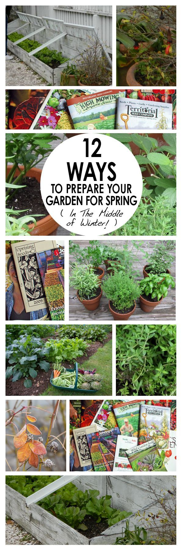 120 best my garden images on pinterest gardening plants and