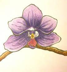 Resultado de imagen para orquidea dibujo