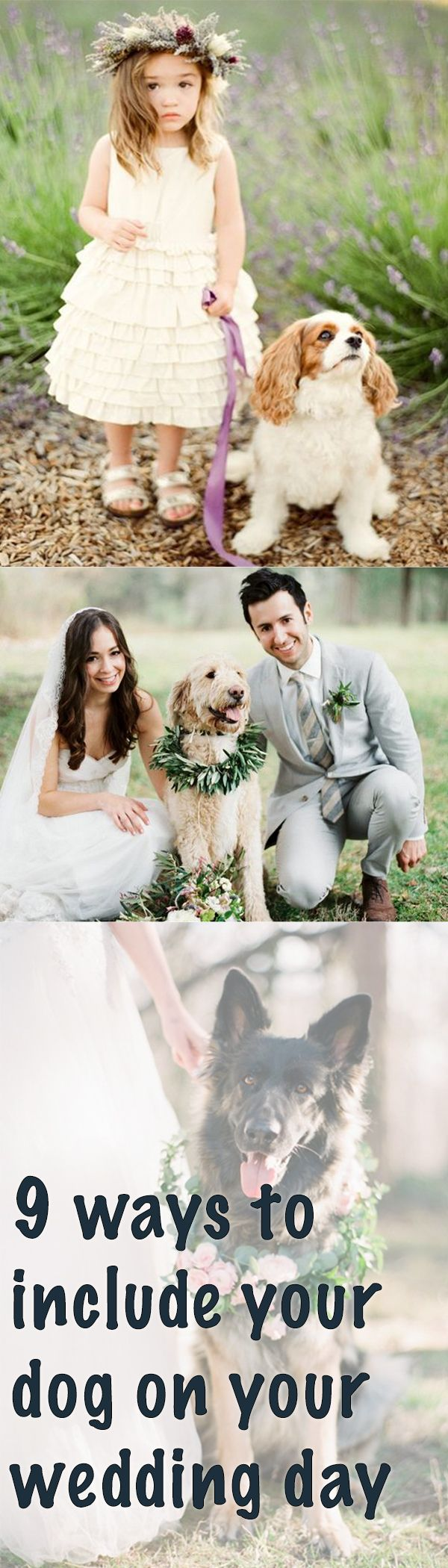 So your wedding day is approaching and you aren't sure how you can fit your beloved dog into the ceremony. Let us help!