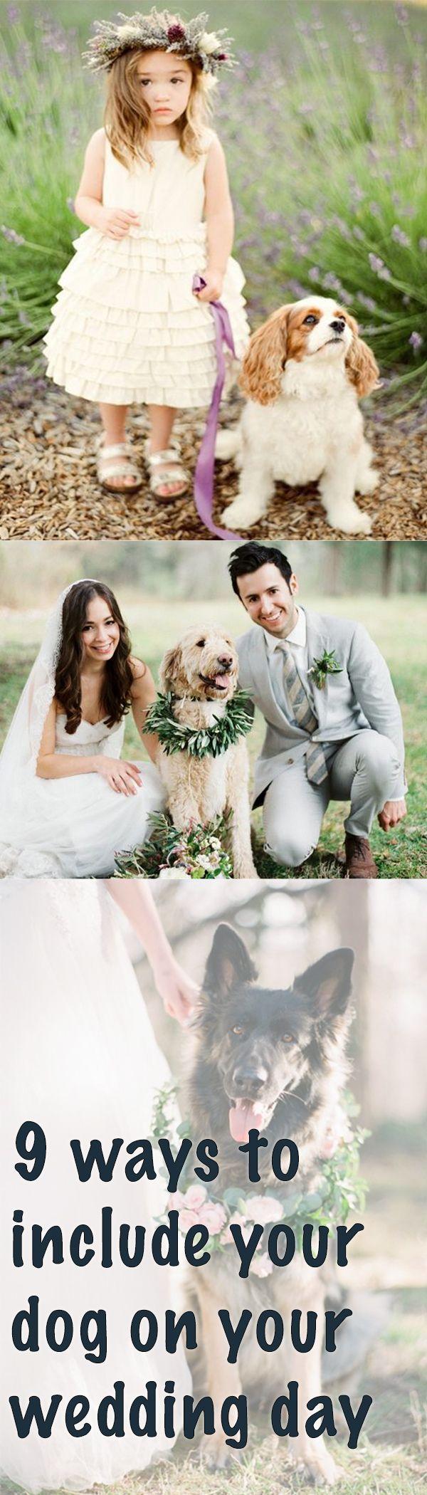 best wedding fur babies images on pinterest dream wedding