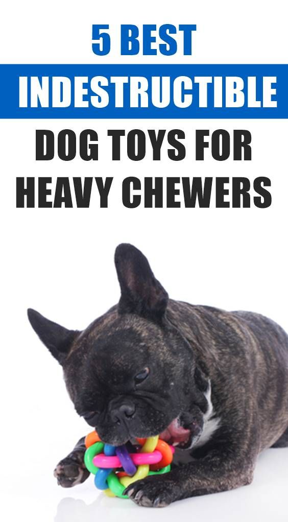 Do You Find Yourself Replacing Dog Toys Every Few Weeks If This