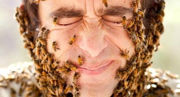 How to Get Rid of Bees?