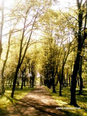 Park Gregoroviusa - Nidzica