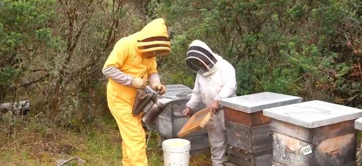 La apicultura es una gran alternativa