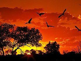 Oferta Speciala Black Friday! Kenya - Safari si Plaja la Oceanul Indian