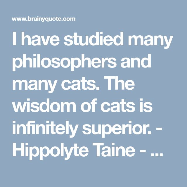 I have studied many philosophers and many cats. The wisdom of cats is infinitely superior. - Hippolyte Taine - BrainyQuote