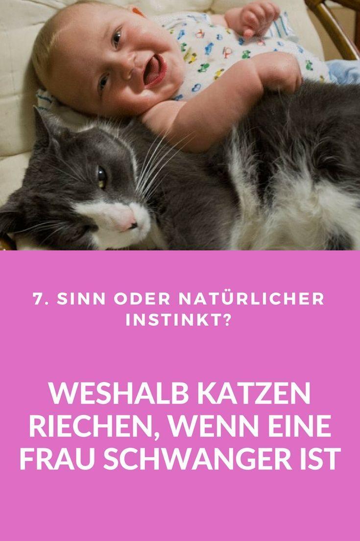 Pin Auf Katzenpsychologie Korpersprache Und Denkweisen Von Katze