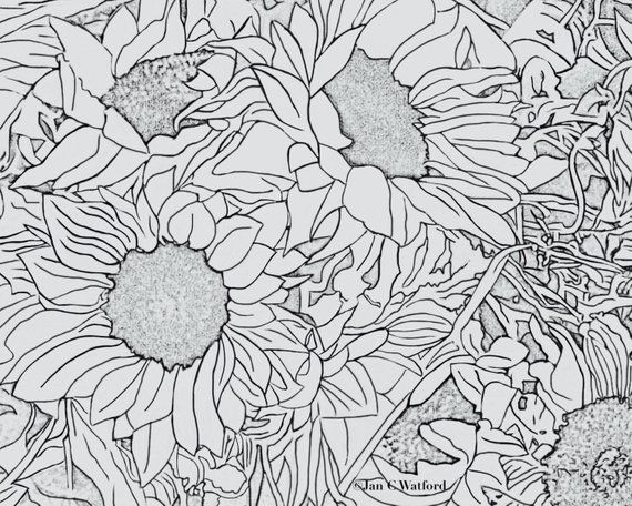 Sunflowers 1 Adult Coloring Pages Coloring Page Printable Gray