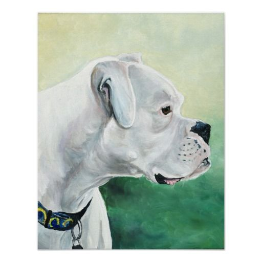 White Boxer Dog Art