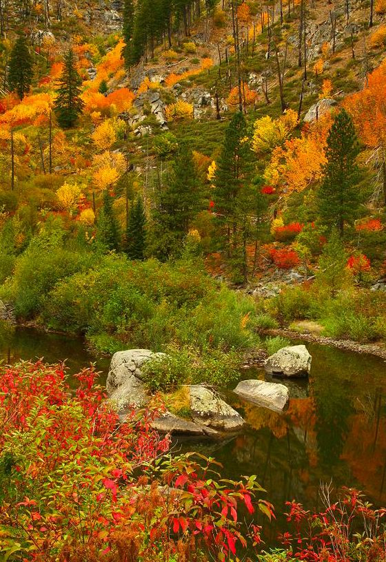 """coiour-my-world: """" Fall Color in Tumwater Canyon, Wenatchee National Forest, WA ~ www.randalljhodges.com """" {♡m♡}"""