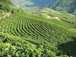 el paisaje en Colombia es Culturales Café.