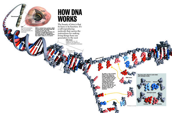 Free DNA Test from the University of Michigan