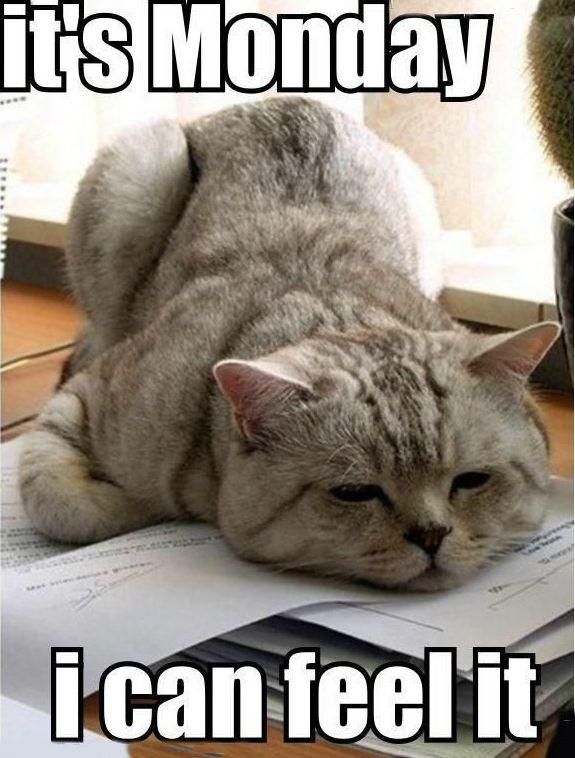 Case of the Mondays cat