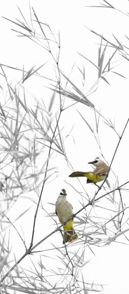 The Birds - Photography by Kim Boon in My Nature Pictorial Art at touchtalent 68231