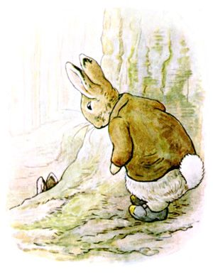 LITTLE Benjamin did not very much want to see his Aunt.  He came round the back of the fir-tree, and nearly tumbled upon the top of his Cousin Peter. Illustration from the classic children's story The Tale Of Benjamin Bunny, by Beatrix Potter