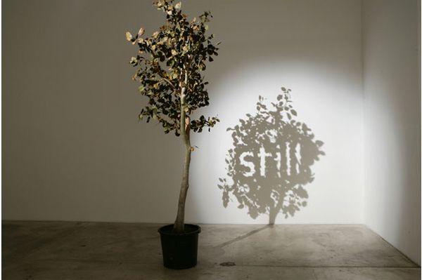 """Fred Eerdekens' shadow art; """"still"""""""