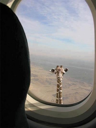 Biscottino o salatino?!? Su www.giraffare.it trovi tutto ciò che la tua azienda desidera! :)