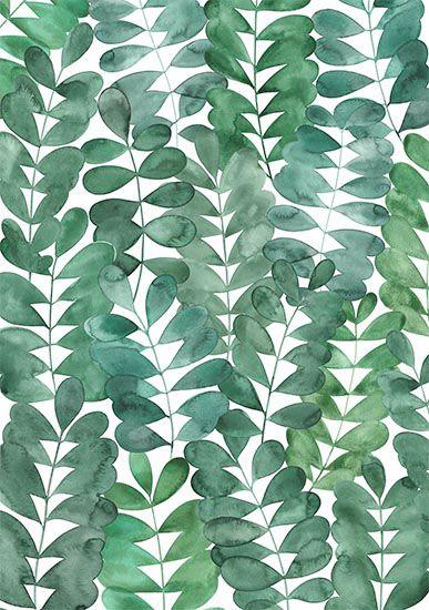 feuilles d'acacia aquarelle