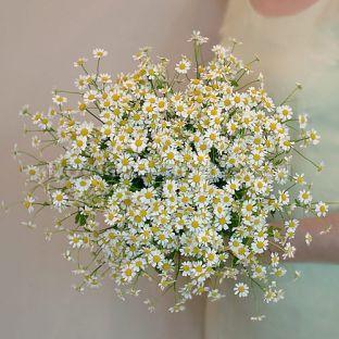 FlowWow! - Букет Б084 из 25 ромашек - цветы от всех флористов твоего города