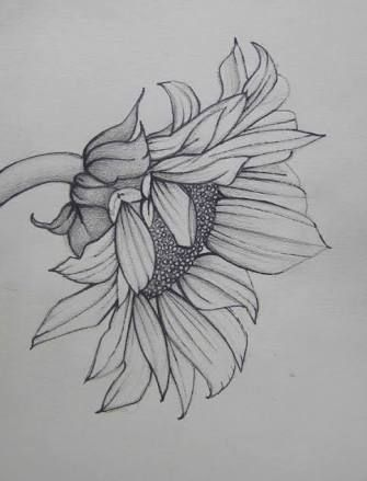 sunflower illustrations free - Google Search