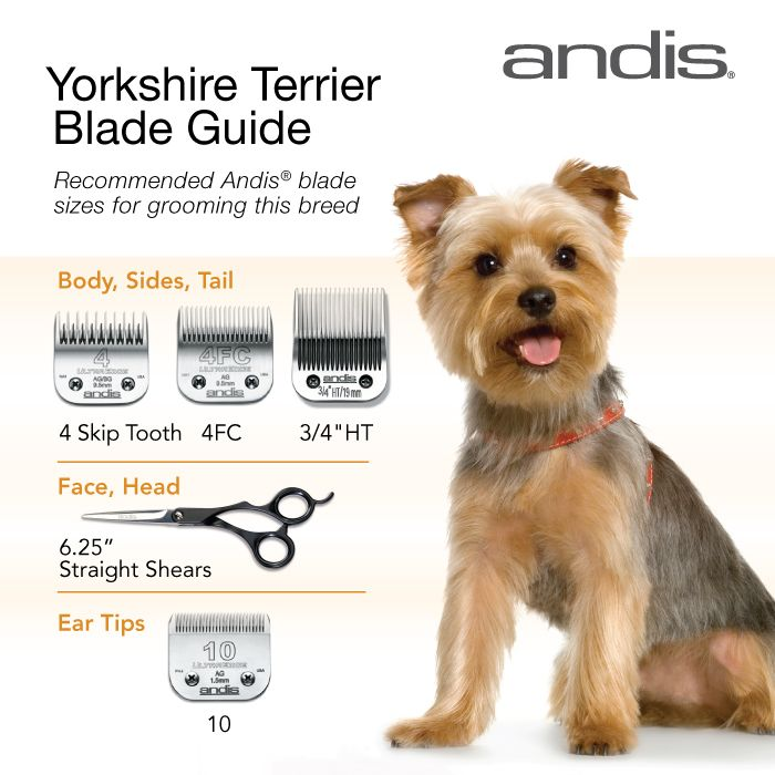 Clipper blades for grooming the Yorkshire Terrier. Hope this helps! Happy grooming!