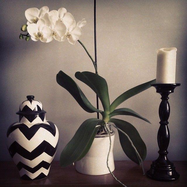 Nowy skarb ;) #chevron #vase #blackandwhite #flowers #orchid #deco #decoration Udanego weekendu!