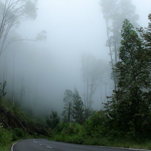 @дневники — Избранное :: Темный лес