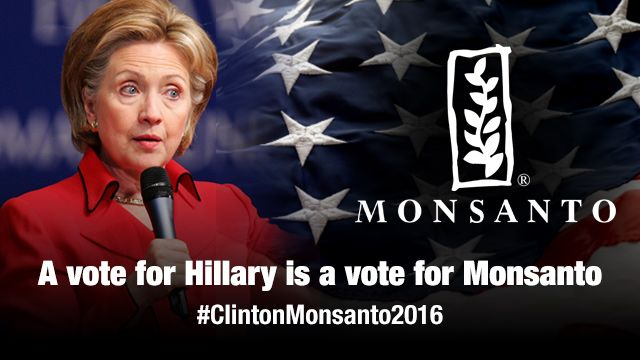 What does a Clinton presidency mean to Monsanto? A solid return on investment...